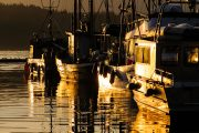 Fishing boats in goldent sunset