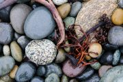 Rocks and Sea Weed