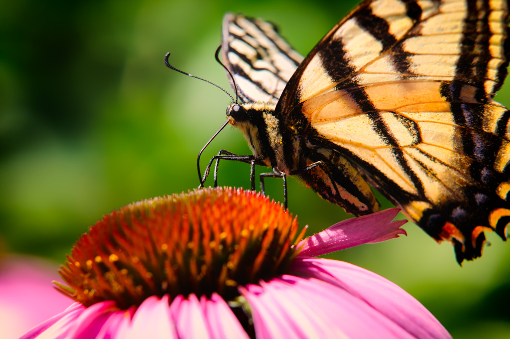 Gardens, Insects and Tubes – Backyard Macro Photography
