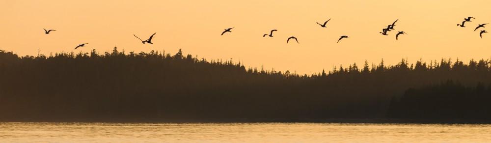 Birds in copper skies