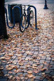 Bike locked in the leaves