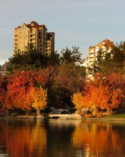Condos growing out of fall colors