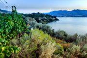 Sagebrush and grapevines over silt bluffs