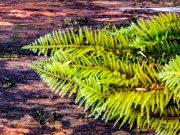 Fern Moss on a log